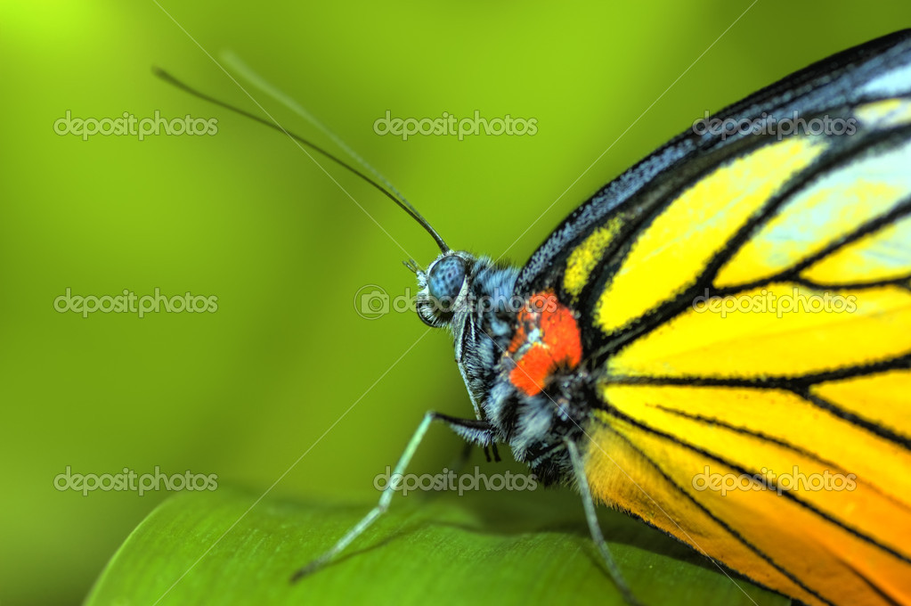 A butterfly resting on a plant   Stock Photo #2379274