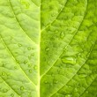 Macro in leaf. — Stock Photo