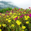 Stock Photo: Wildflowers