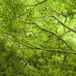 Stock Photo: Tropical green forest
