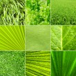 Nature green background - 图库照片