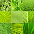 Royalty-Free Stock Photo: Nature green background
