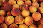Close-up of juicy ripen peaches — Stock Photo