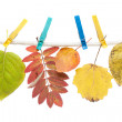 Autumn sheet on clothes-peg — Stock Photo