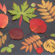 Stock Photo: Autumn sheet