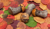 Mushrooms put on autumn sheet — Stock Photo