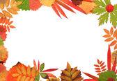 Frame van hun herfst sheet — Stockfoto