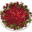 Cowberry on plate — Stock Photo #2120386