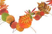 Autumn sheet strewn in heap — Stock Photo