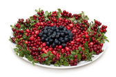 Cowberry and whortleberry on plate — Stock Photo
