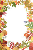 Rahmen von Herbst-Blatt — Stockfoto