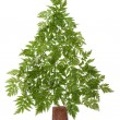 Decorative cristmas spruce — Stock Photo #2342855