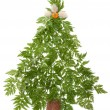 Decorative cristmas spruce — Stock Photo #2344168