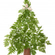 Decorative cristmas spruce — Stock Photo