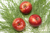 Three red apples, green herb — Stock Photo