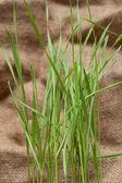 Green herb on sackcloth — Stock Photo