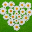 Camomile heart on green background — Stock Photo