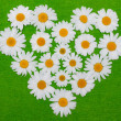 Camomile heart on green background — Stock Photo #2495867