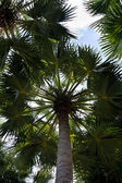 Stem of the palm — Stock Photo