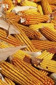 Corn ears — Stock Photo
