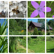 House in garden in spring collage — Stock Photo