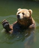 The bear — Stock Photo