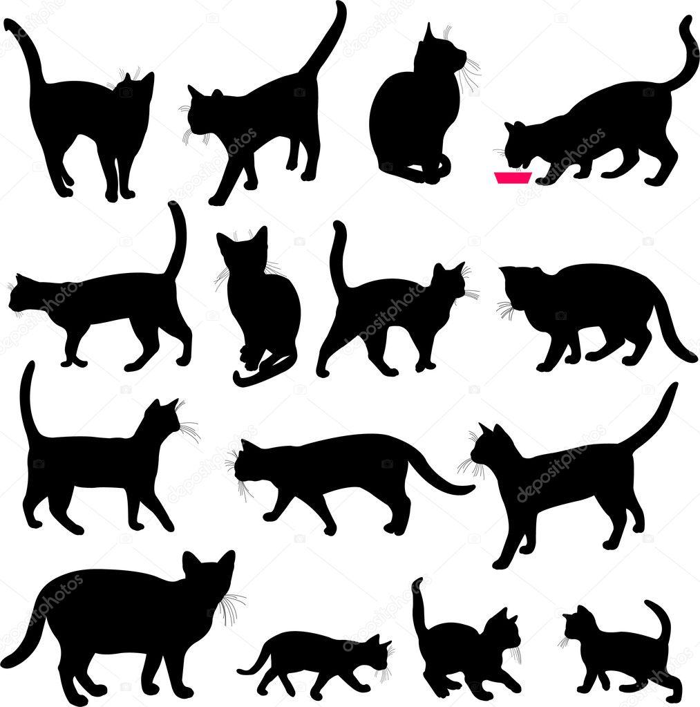 chat ou tchat Aix-en-Provence