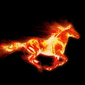 Fiery stallion. Horse — Stock Photo