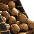 Walnuts — Stock Photo #2094448