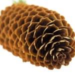 Cone spruce — Stock Photo