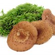 Stock Photo: Edible fungus