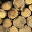 Logs — Stock Photo #2377067