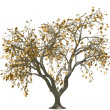 Stock Photo: 3d oak tree render with gold leaf