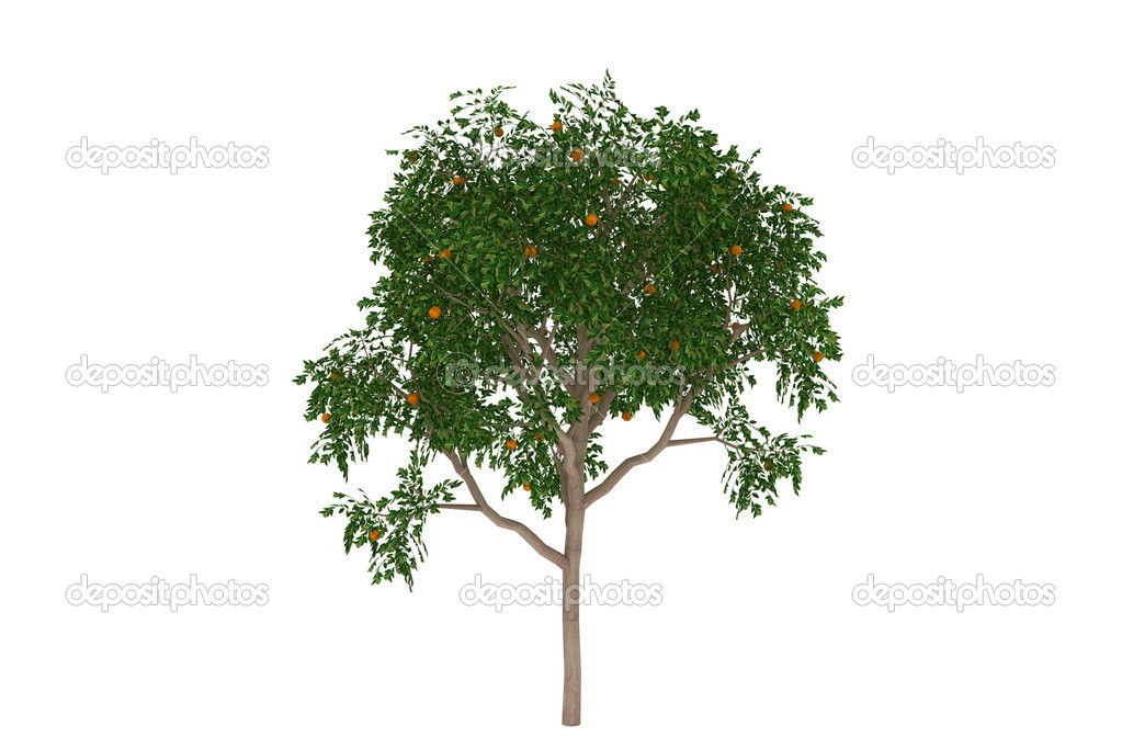 3d generated computer model render evergreen orange tree isolated on white — Stock Photo #2103924