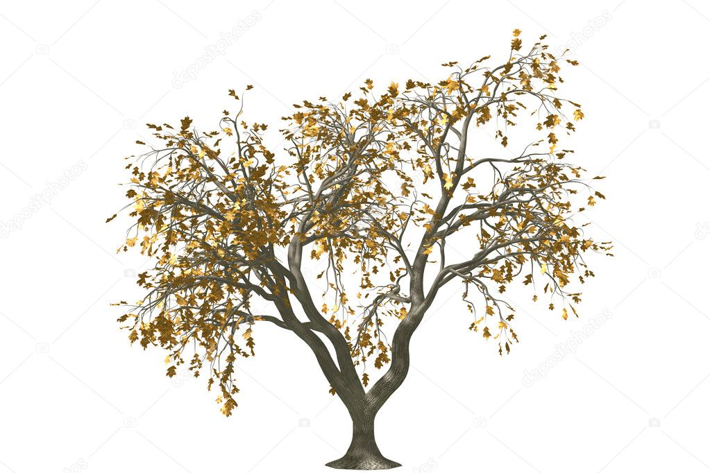 3ds max graphic decoration oak tree render on isolated white background with rusty leaf — Stock Photo #2104568