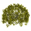 Royalty-Free Stock Photo: Decorative bush with clipping path