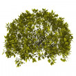 Decorative bush with clipping path - Stock Photo