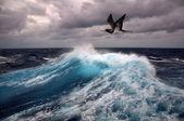 Sea wave and seagull — Stock Photo