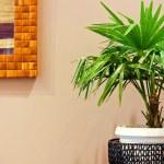 Plant 2 — Stock Photo #2080671