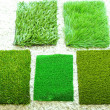 Stock Photo: Grass samples