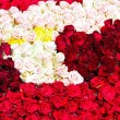 Stock Photo: Roses assortment