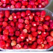 Royalty-Free Stock Photo: Wild strawberries