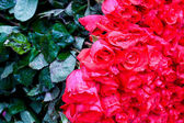 Red roses bouquet — Stock Photo