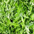 Royalty-Free Stock Photo: Rucola