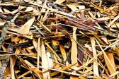 Timber waste — Stock Photo
