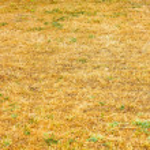 ������, ������: Savanna drought