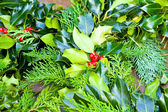 Sprig of holly — 图库照片