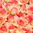 Royalty-Free Stock Photo: Roses background