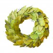 Laurel wreath isolated - Stock Photo