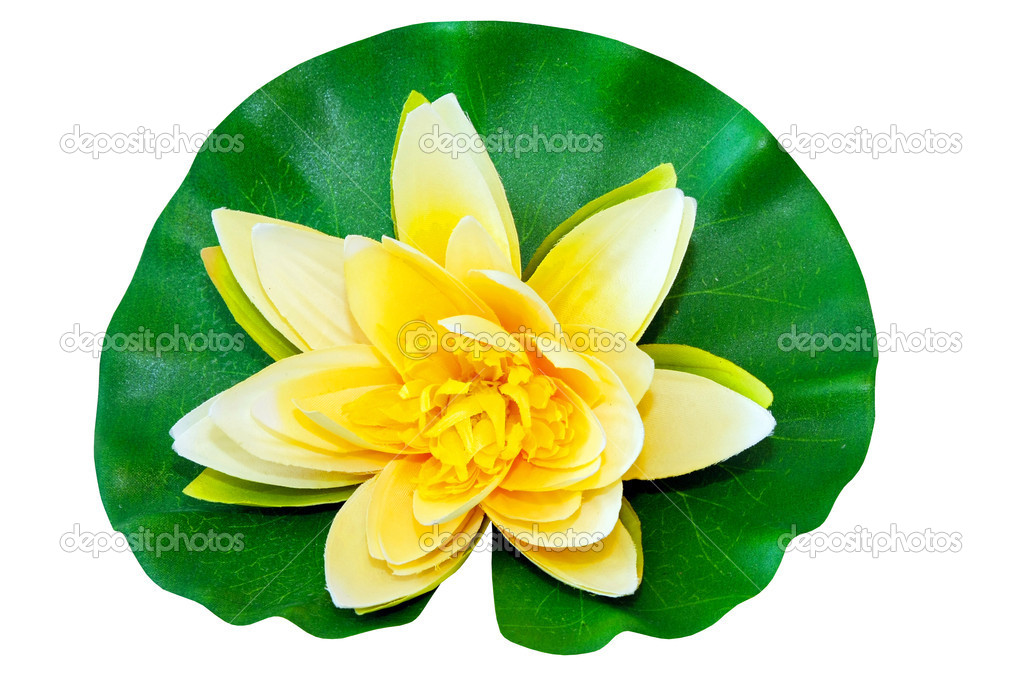 Yellow water lily isolated included clipping path — Stock Photo #2263438